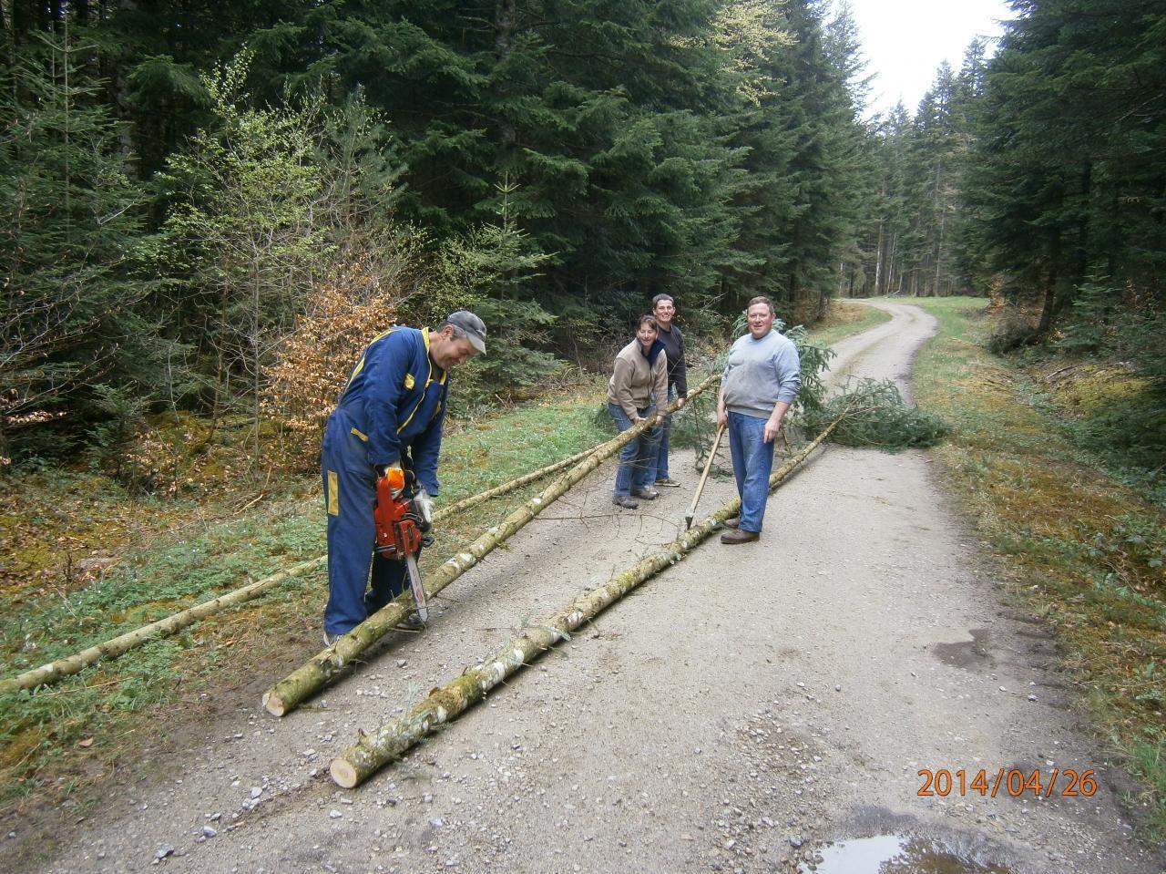 Coupe des arbres